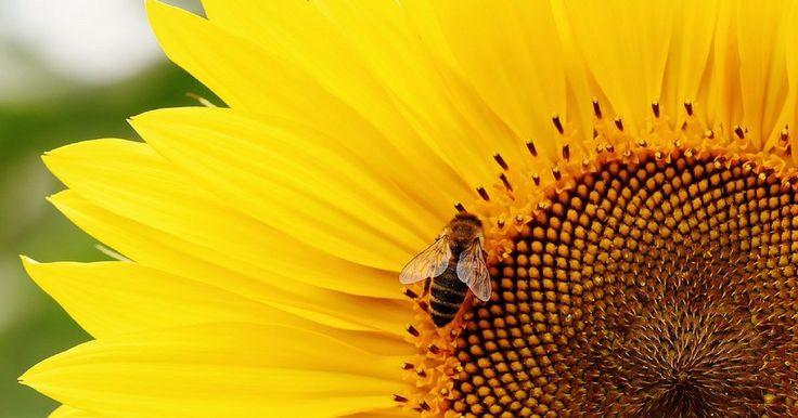 RIVOLUZIONE IN SARDEGNA: ECCO IL DISERBANTE ECO CHE SALVA LE API DALL'ESTINZIONE Un eco diserbante, al 100% naturale, che non altera il ph del suolo e non minaccia la vita di api e farfalle. L'ultimo regalo dell'imprenditrice sarda votata alla difesa dell'ambiente e al riuso. http://bit.ly/2nNc8rW