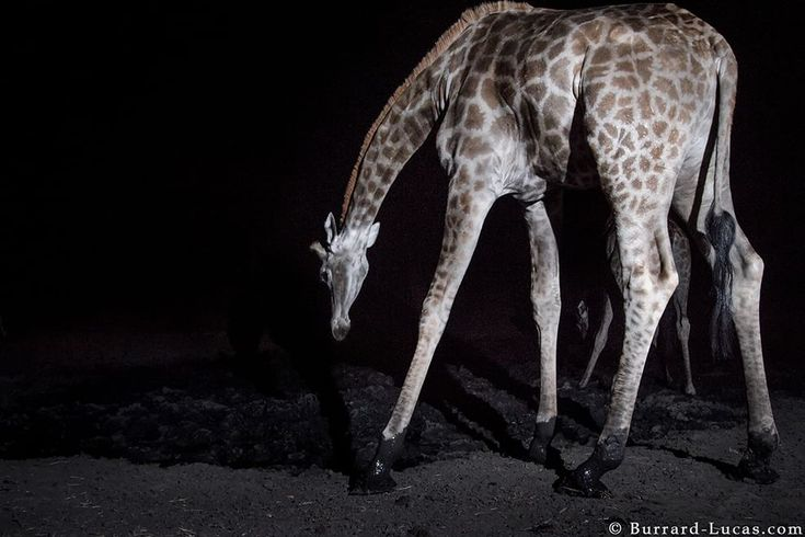 La Repubblica. Trappole fotografiche: il mondo notturno degli animali selvatici