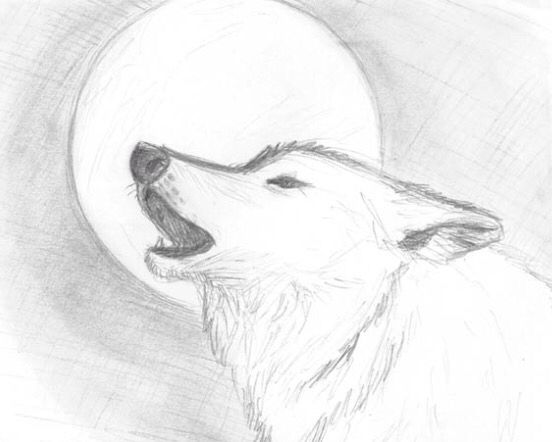 180 Best Wolf Drawings Images On Pinterest
