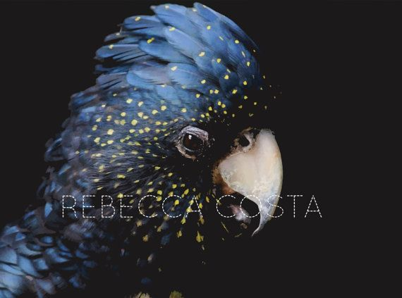 Print Size: A1 23.4 x 33.1 in  Unique Wall Art bird photo