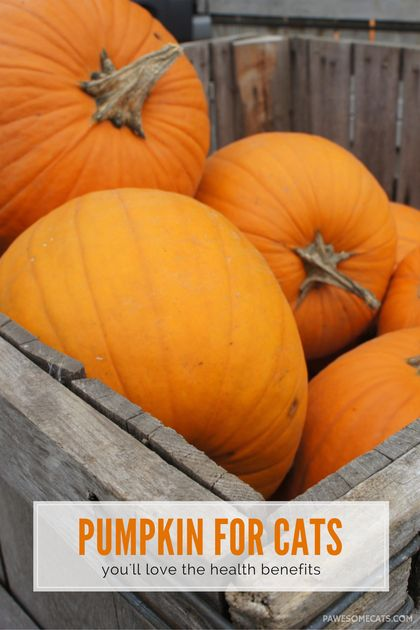 13 Benefits of Pumpkin for Dogs and Cats - Morris Animal Inn