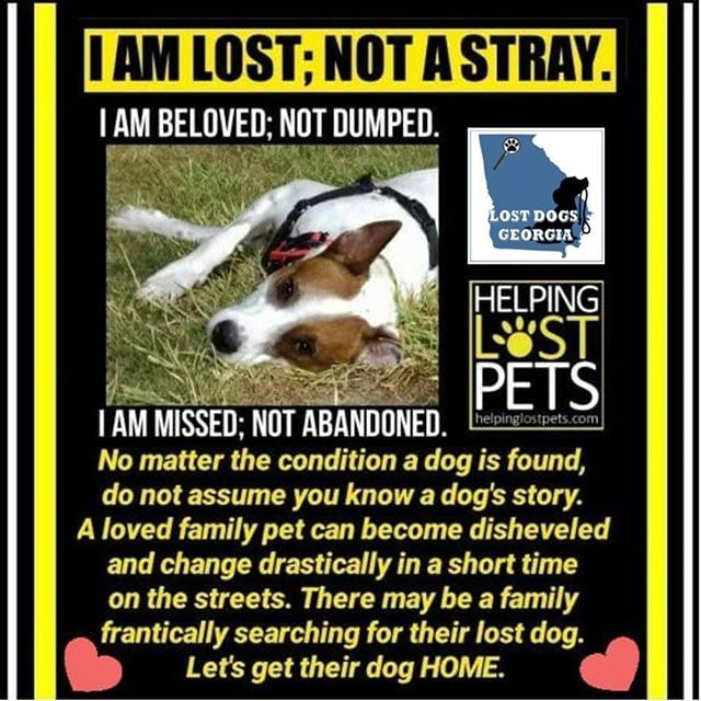 A Good Message From Our Friends At Lost Dogs Georgia Losing A Dog Losing A Pet Pet Hacks