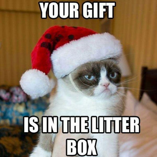 TOP 25 Funny Cats Memes | Funny Animals, Funny Cat | DomPict.com