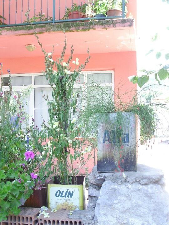 Front Garden - Turkey