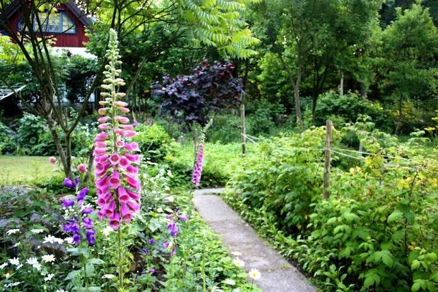 Foxglove - Fingerborgsblomma Skogstorpet Trädgårdsdesign [Gardendesign - Landscaping]: Inspiration