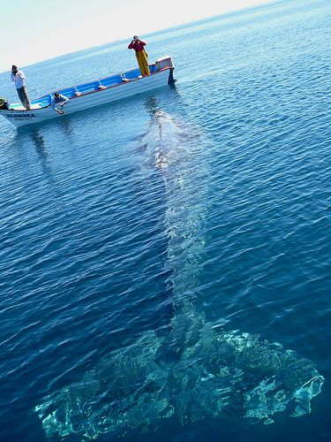 Whale watching in Baja, Mexico. Amazing.