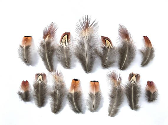 Mixed Natural Male Pheasant Feathers Brown Black Cream