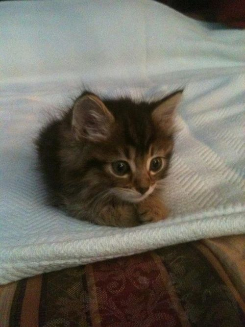 """""""Never pick up a stray kitten unless you've already made up your mind to be…"""