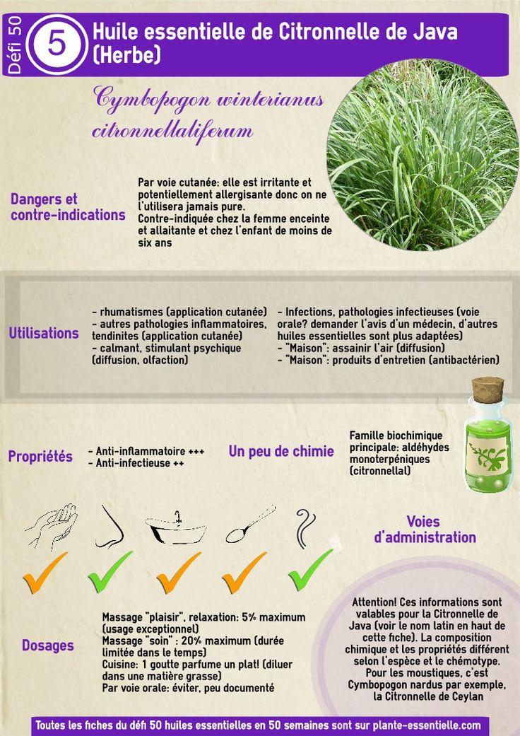 Huile essentielle de citronnelle : propriétés et utilisation sans danger (cymbopogon winterianus)