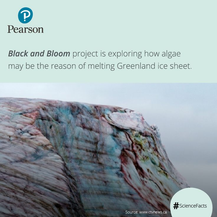 Researchers are working on red, green and brown-coloured algae across the Greenland ice sheet. This algae blooms in summer making the snow dark and causing it to absorb more sunlight and melt faster. ‪#‎Amazingfacts‬