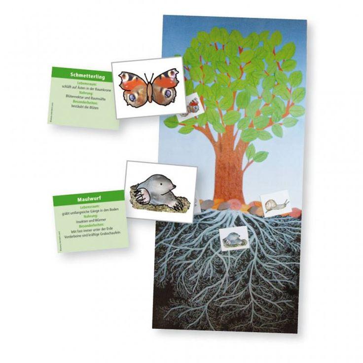 Der Baum als Lebensraum, Buch, W-80299 – WL Versand