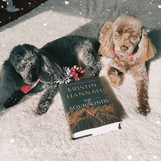 Click on the image to read my complete book review. #bookstadog #poodles #poodlestagram #poodlesofinstagram #furbabies #dogsofinstagram #bookstagram #dogsandbooks #bookishlife #bookishlove #bookstagrammer #books #booklover #bookish #bookaholic #reading #readersofinstagram #instaread #ilovebooks #bookishcanadians #canadianbookstagram #bookreviewer #bookcommunity #bibliophile #thefourwinds #kristinhannah #bookreview