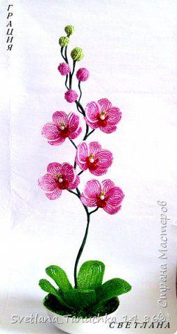 орхидея по мк Н.Вербицкой фото 1