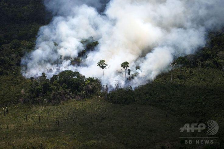 ブラジル・パラ(Para)州に広がる熱帯雨林で行われている違法伐採の現場で発生した山火事の煙(2014年10月14日撮影)。(c)AFP/Raphael Alves ▼16Oct2014AFP|上空から見たアマゾンの違法伐採現場 http://www.afpbb.com/articles/-/3029095 #Illegal_logging #Para_Brazil