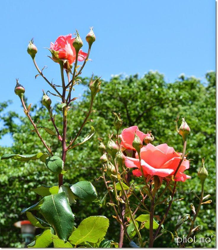 Everything Good Day: flower-3-  #flower #nature #blogger