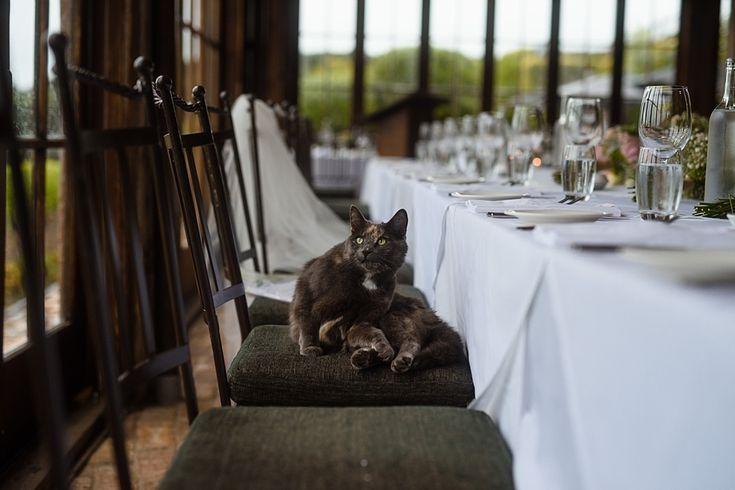 The resident cat | Mudbrick Vineyard & Restaurant, Waiheke Island
