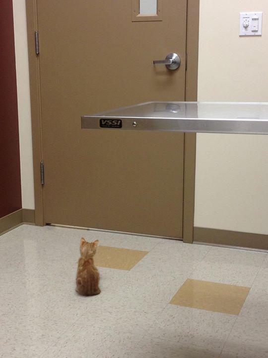 waiting for the vet