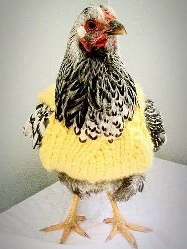 Harris Sisters GirlTalk: Chickens in Sweaters