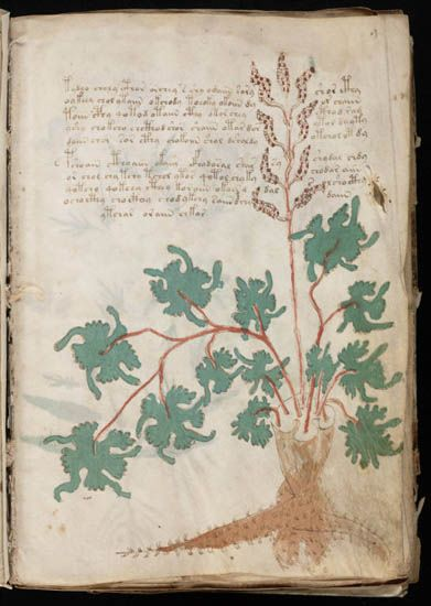 The Voynich manuscript is an ancient Central European text written between the 15th and 16th centuries that, to date, has been impossible to decipher. Described as a magical or scientific text, nearly every page contains botanical, figurative, and scientific drawings of a provincial but lively character, drawn in ink with vibrant washes in various shades of green, brown, yellow, blue, and red.