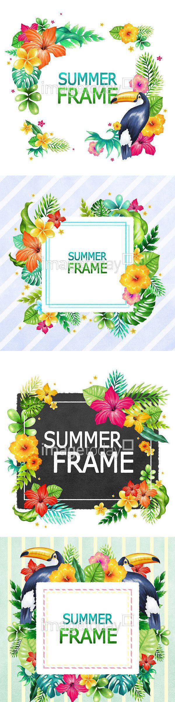 계절 꽃 도형 동물 무늬 문자 백그라운드 식물 여름 열대지방 영어 잎 자연 조류 줄무늬 카드 페인터 프레임 플루메리아 하와이 히비스커스…