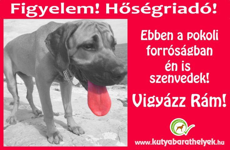 A hőségben a kutyák is szenvednek! Vigyázzunk rájuk!  #kutya #hőség #plakát #forróság #egészség #dog #heat #weather #health #kutyabarathelyek #kutyabaráthelyek