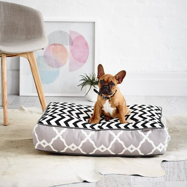 Meet Gustavo our Mascot - French Bulldogs & French Oak Flooring go hand in hand   #French #Oak #Flooring #Frenchbulldog #Frenchie #Architecture #Home #Hardwood #Colour #DesignInterior #Eco #Floor #Interior #Interiors #InstaDecor #Interiores #InstaDesign #Interior123 #Interior444 #InteriorDecor #InstaInteriors #InteriorDesign #InstaArchitecture #Melbourne #PortMelbourne #Showroom #Sustainable #Timber #Puppy #Mascot