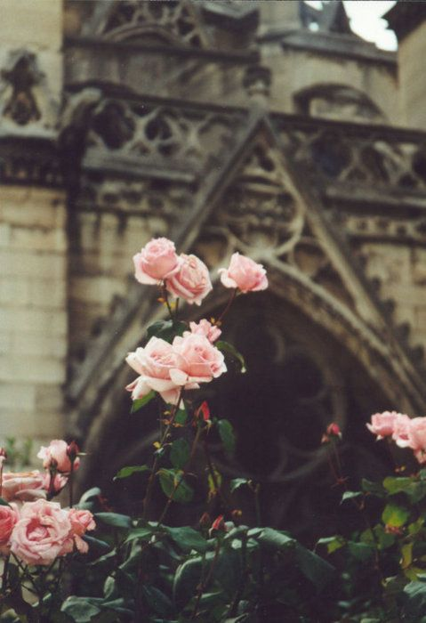 Vintage look with pink roses.