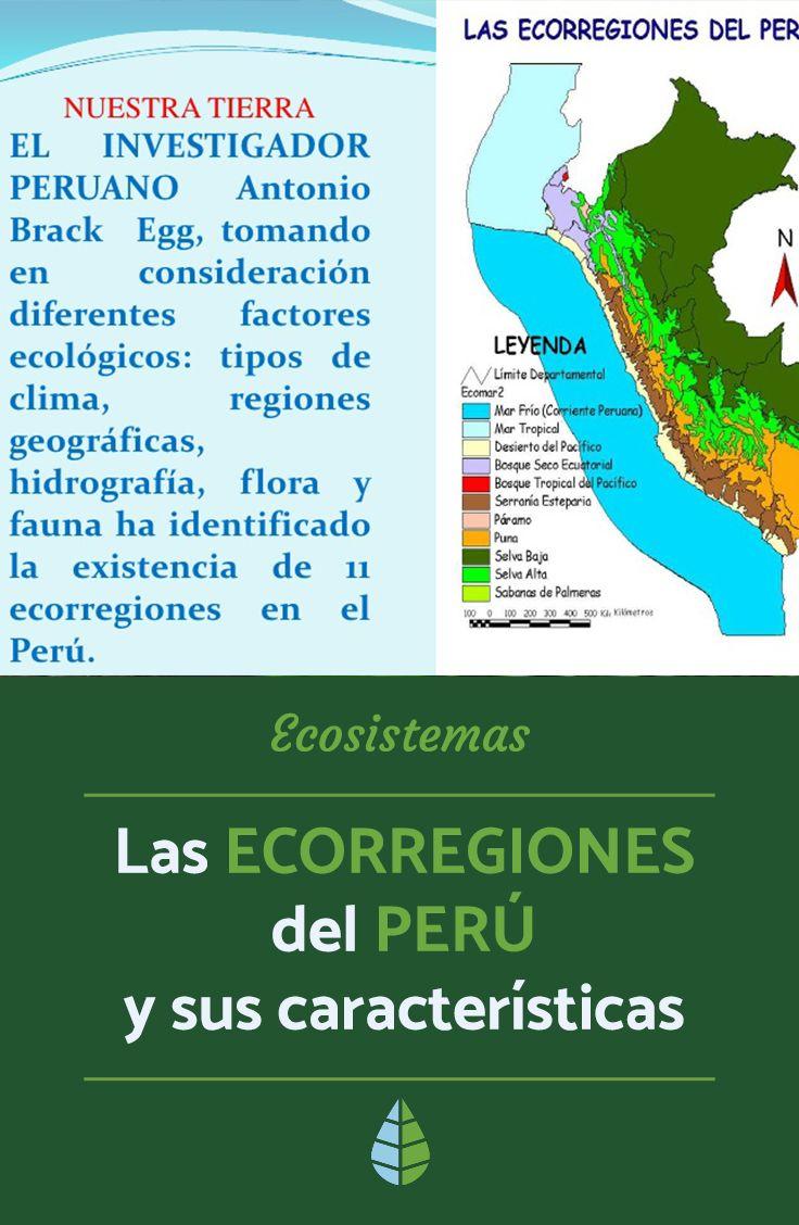 Las Ecorregiones Del Perú Y Sus Características Con Mapa Tipos De Ecosistemas Ecosistemas Mapas