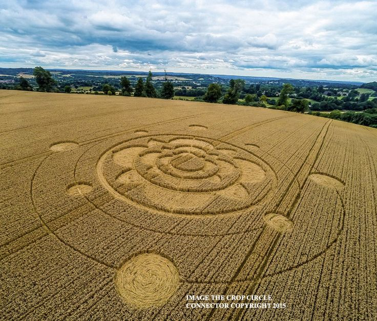 Crop Circle at Furzefield Shaw, Nr Merstham, Surrey, United Kingdom. Reported 29th July 2015