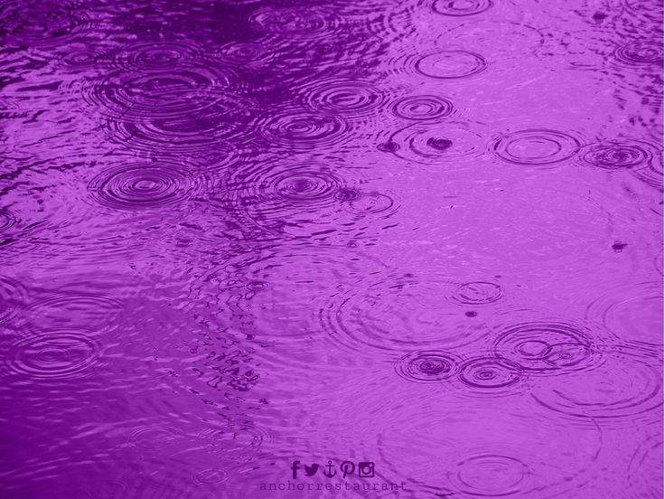 🔷 Purple Rain 🎶  #Prince #PurpleRain #PurpleTears #RIPPrince #PrinceRIP #friday #princetribute #anchorcafe #anchorrestaurant #anchorestaurant #milsonspoint #kirribilli #lavenderbay #northsydney #autumn #autumnal #autumn2016 #autumnsydney #autumnprince