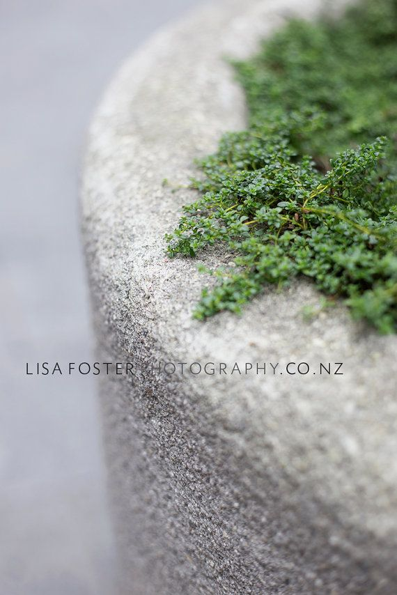 Fine Art Photographic Green Grey Botanical by lisafphotography