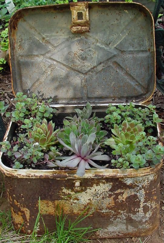 love old junkGardens Ideas, Vintage Suitcases, Cacti Garden, Breads Boxes, Succulent Gardens, Vintage Metal, Old Tins, Tins Boxes, Old Suitcas