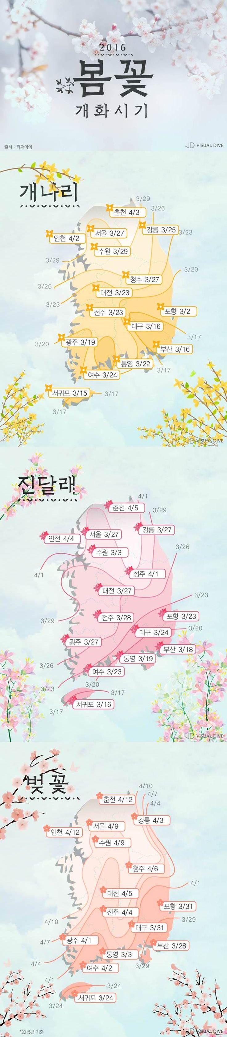 꽃망울이 활짝…봄을 알리는 꽃, 개화시기는 언제? [카드뉴스] #flower / #cardnews ⓒ 비주얼다이브 무단 복사·전재·재배포 금지
