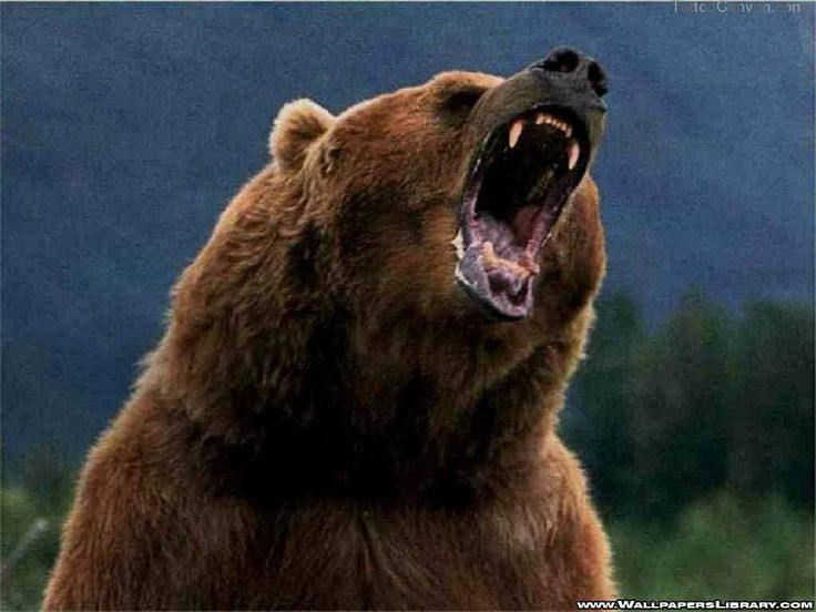 Download Cute Grizzly Bear Tattoo Pictures To Pin On Pinterest in many sizes.