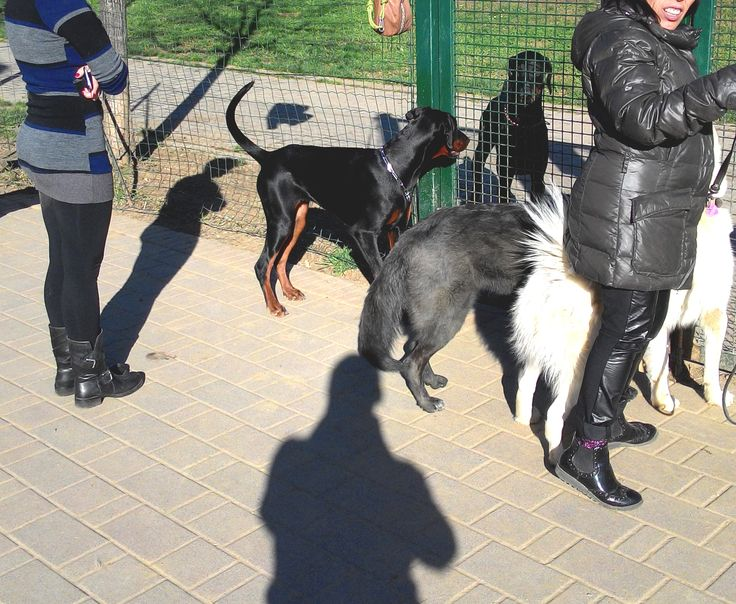 27/03/2015 - Torino con Peja, Temi e Terry