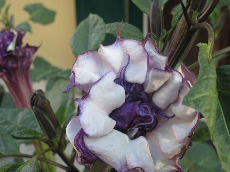Un bellissimo fiore ma...