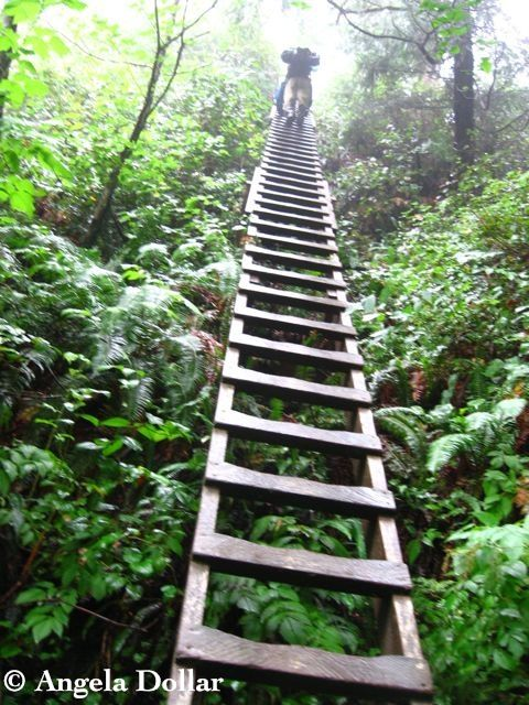 WCT ladder - a possible summer solo hike adventure? hmmm
