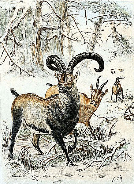 10 Game Animals That Have Recently Gone Extinct Animal