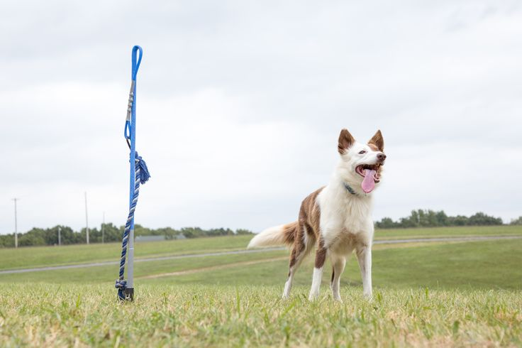 Best Ways To Keep Herding Dogs Entertained