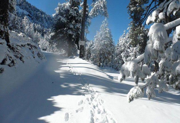 Monterreal es una estación de esquí alpino ubicado al sureste del estado de Coahuila en el municipio de Arteaga.
