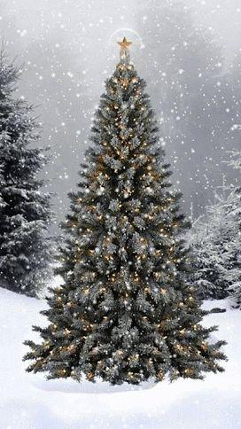 //WATCH THE WINTER SNOW, CHRISTMAS TREE GIF #winter #snow  #christmas