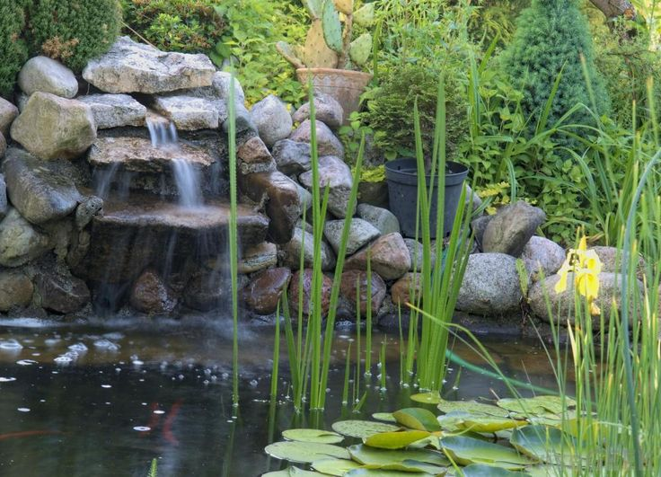 What Is The Freshwater Biome With Pictures On Pinterest Discover The Best Trending Pond