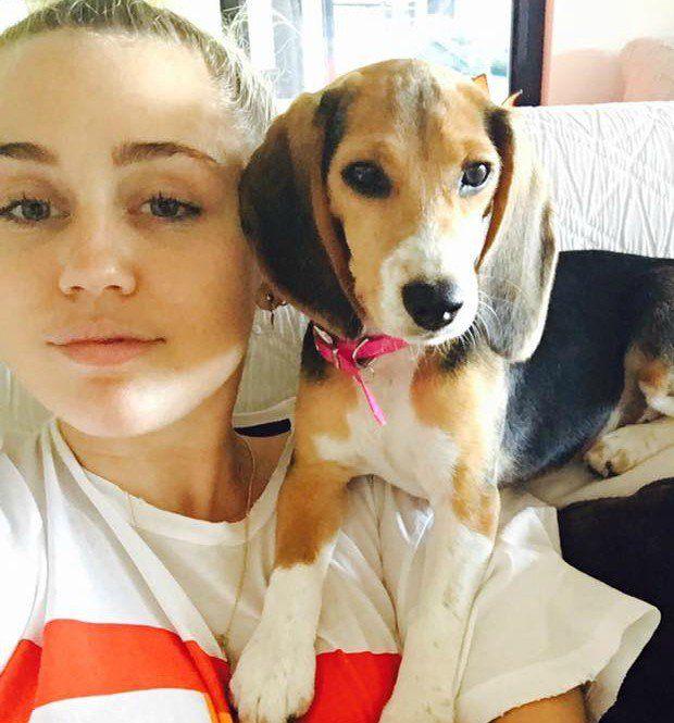 Miley Cyrus adota beagle explorada em testes de laboratório