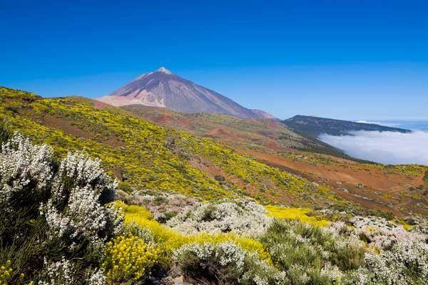 Descubrir los inesperados paisajes primaverales del Teide