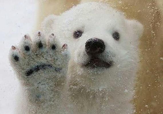 Képeken minden idők 10 legcukibb állata   femina.hu