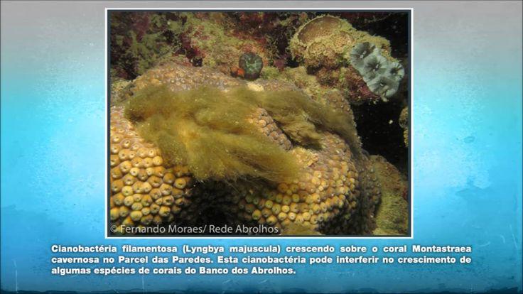 Rede Abrolhos/CNPq - 68ª SBPC 2016