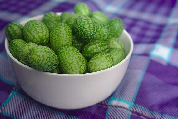 Mexican Sour Gherkin Cucumber seeds heirloom popular