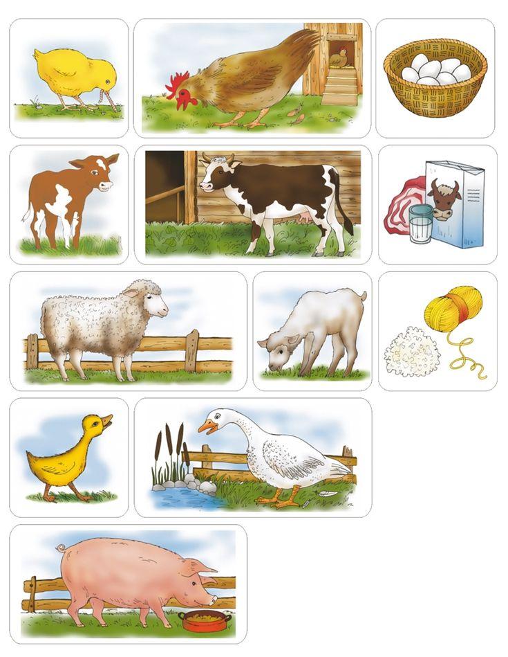 Domáce zvieratá - úžítok