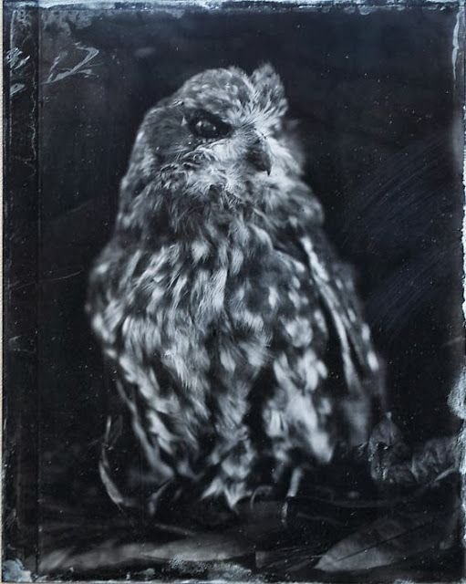 Hill End Press: boobock owls and tintypes