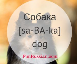 Russian Video Lesson: Domestic Animals and Birds -